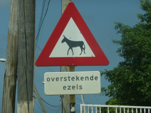 Wild donkeys roam all over Bonaire. This sign tries to warn the often fast driving cars.