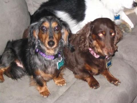Kishka & Mandy - Mandy is possessed.  Those eyes!  Oh, those evil eyes!!!