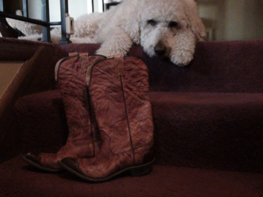 Western Riding Boots...and Cooper