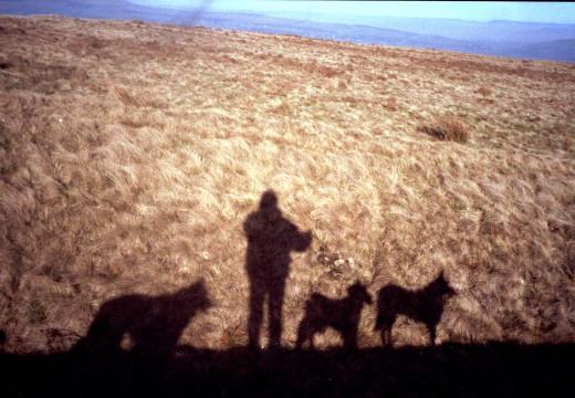 Walking the Dogs on Hammeldon Hill, Lancashire