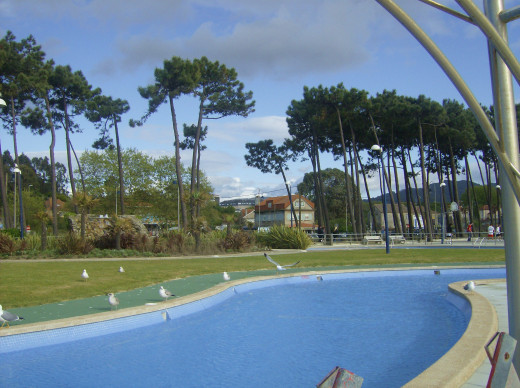 Pine trees around a swmiming pool