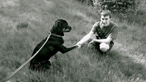 Rottweiler friend: family dog