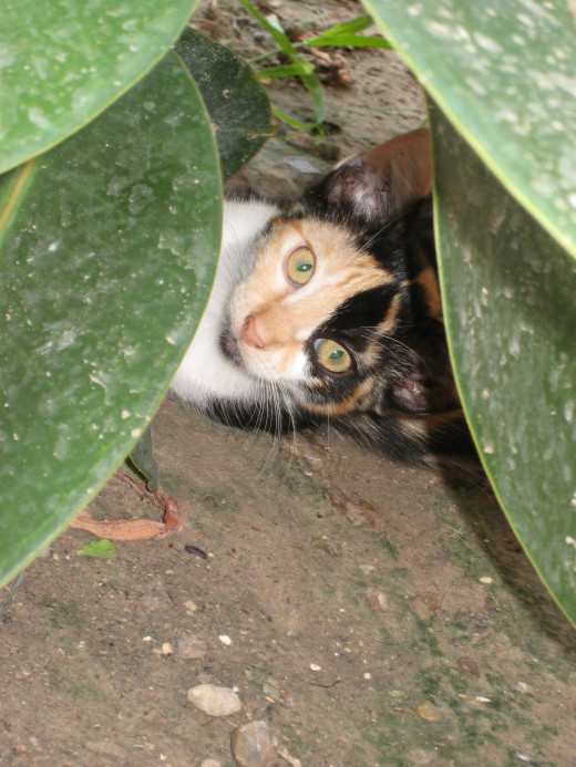 Patches peeks out