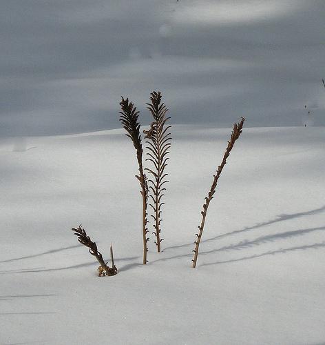 Winter Beauty from deu49097 Source: flickr.com