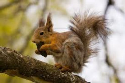 Do squirrels eat tree bark?
