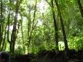 Hike the Saint Lucia Rainforest