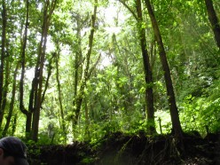 Hike the Saint Lucia Rainforest