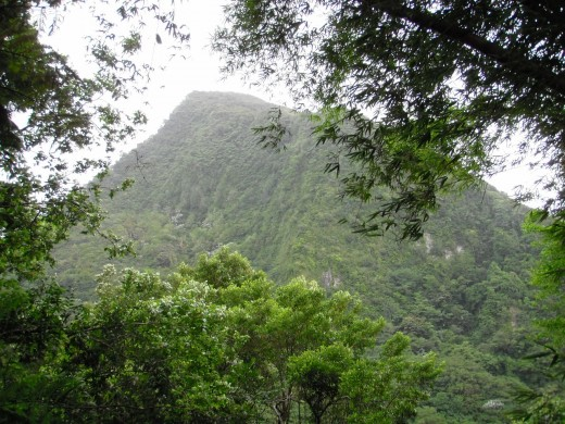 Bamboo grove frames the next peak over, to the east. Piton Canarie, Piton Troumassee and Mount Gimie are all near the Enbas Saut Trail and are usually covered in cloud.