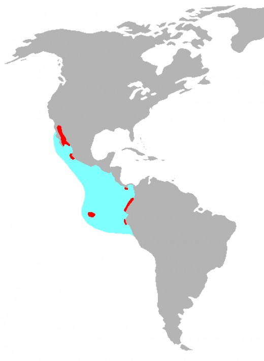 This map displays the distribution of the Blue Footed Boobies. The red area is where most of the Blue Footed Boobies live.