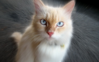 Casper, one of the culprits