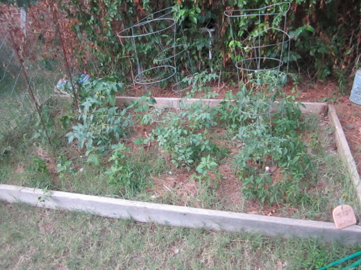 This is my original vegetable bed that I built a few years ago. This is how it looks this year. Tomato plants are growing, but . . .