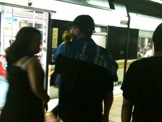 A rider from one of the two newly opened stations navigates Metro Center with his parrot.