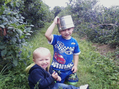 My nephews enjoying blueberry picking