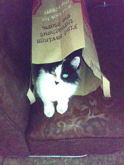 Perdy let me know that although the bag was fun for awhile, she's expecting something better for Christmas this year