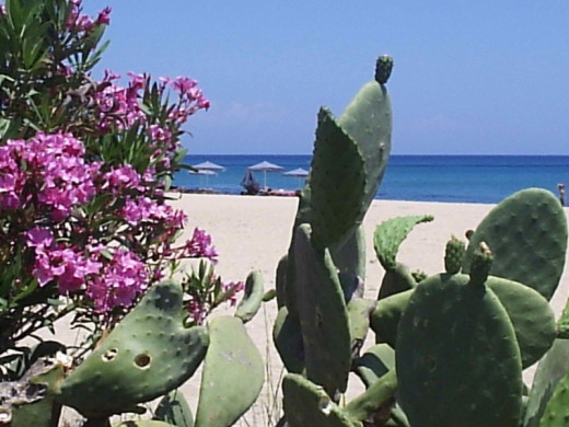 Lush vegetation alongside the sandy beach at Skala