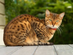 20 Weird and Interesting Facts About Cats