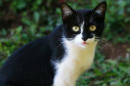 An asymmetrical cat.