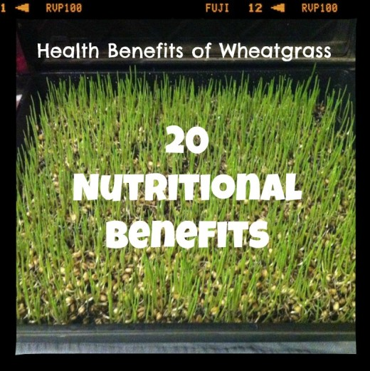 Nutritional Benefits of Wheatgrass