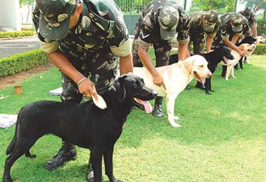 Army dogs being groomed