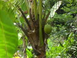 Coconut Milk Benefits For Health