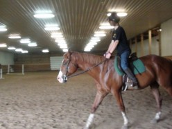 What to Expect at Your First Horseback Riding Lesson