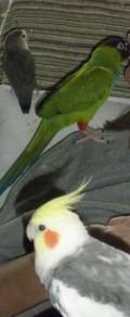 My Life, With Birds (Volume 1)