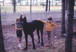 My sister (left), her best friend and our Great Dane, Zorba.  Childhood full of innocence and dreams.