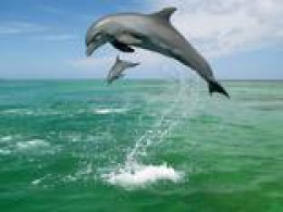Dancing dolphins.\