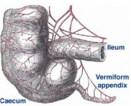How To Tell If You Have Appendicitis. Symptoms Of Appendicitis.