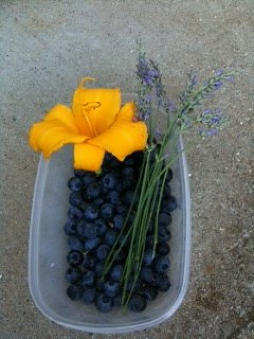 Healthy Edibles (blueberries, lavender, daylily)