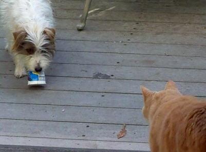 A disagreement over yogurt