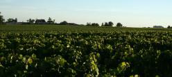French Wine Regions - Bordeaux