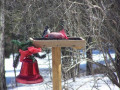 Bird Watching In Our Backyard Two Pileated Woodpeckers, Hummingbirds.