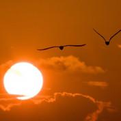 Gulf Coast Sun profile image