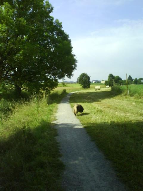 green grass and trees, benda walk along the creek