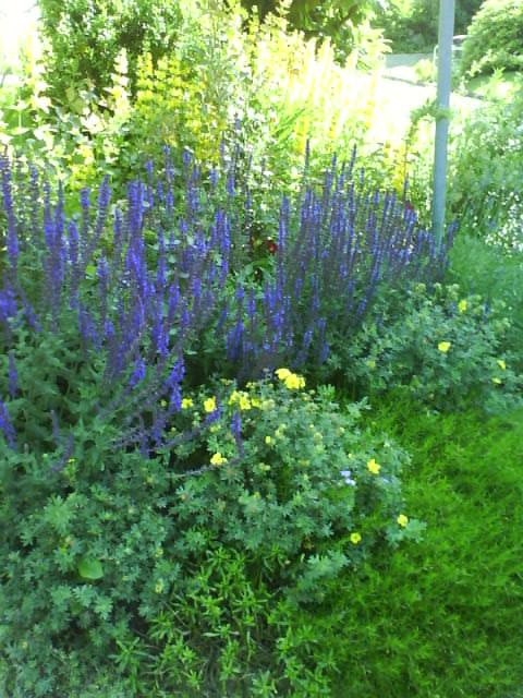 summer flowers, lavendel
