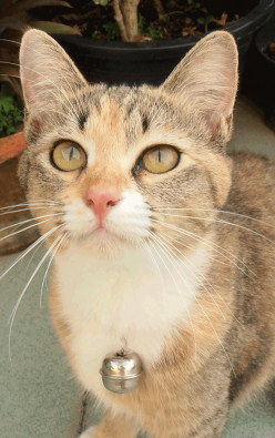 Sandy the Cat's Recovery after Neutering.