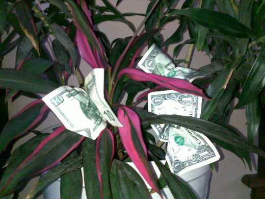 Combine money and plants for a unique money tree gift for a birthday or Mother's Day gift!