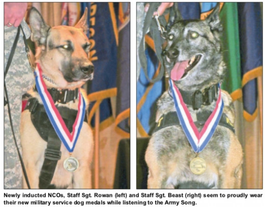 Newly inducted NCOs, Staff Sgt. Rowan (left) and Staff Sgt. Beast (right) seem to proudly wear their new military service dog medals while listening to the Army Song