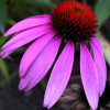 justgrace1776 profile image