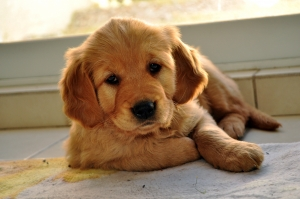 Most cute pictures of puppies depict a puppy laying down, sleeping or being calm. Most of the time, they aren't like that!
