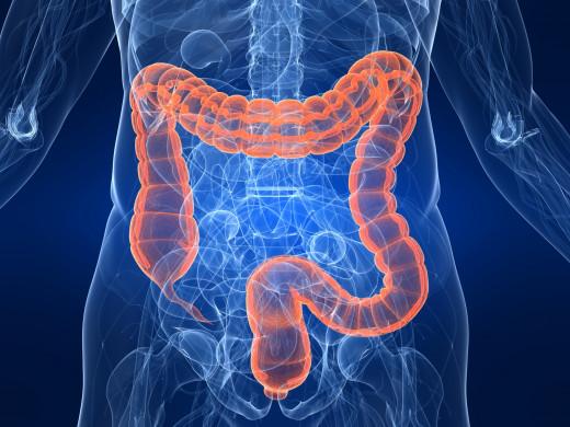 antibiotics alter gut bacteria