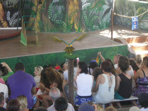 Tropical Birds Show