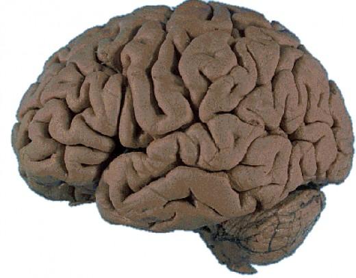 "a ""functioning"" human brain"