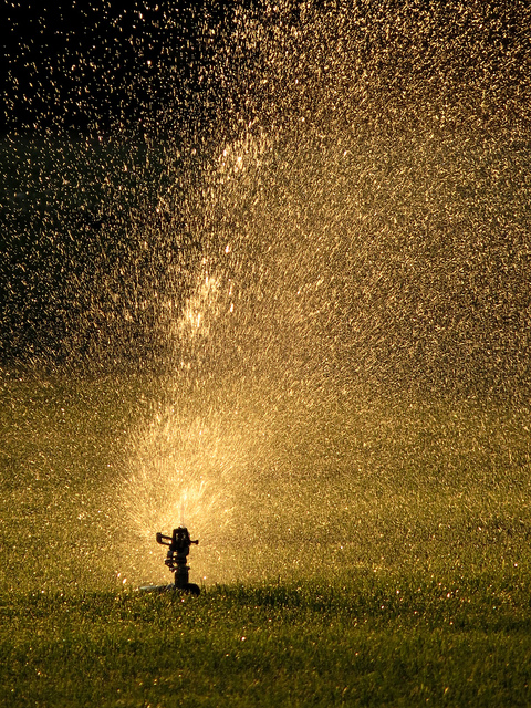 Lawn Sprinkler.