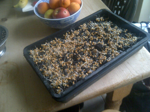 Actually you could pack more seed into this tray with no problem
