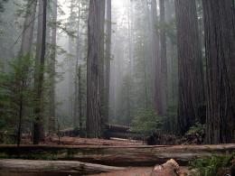 Rockefeller Forest, Humboldt Redwoods State Park