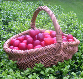 Crammed Basket