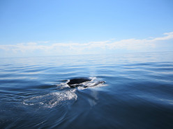 A Massachusetts Whale Watch