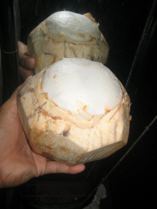 Young Coconut  (Photo Credit: Travel Man)
